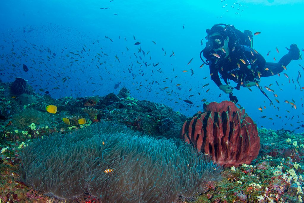 Top 5 things to do in Andaman for travellers